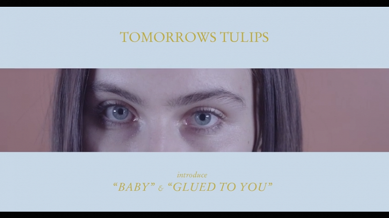 Tomorrows Tulips -